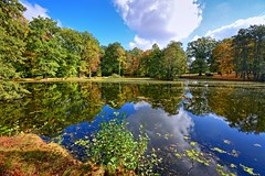 With all our hearts.... (Tobi_2008) Tags: herbst autumn teich pond spiegelung reflection bäume trees sachsen saxony deutschland germany allemagne germania tobi