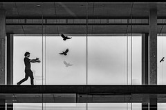 Catching the Birds (Leipzig_trifft_Wien) Tags: frankfurtammain hessen deutschland de street streetphoto silhouette glass shadow structure building lines geometry walking moment decisive people person