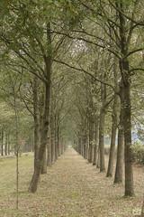 DN9A6186 (Josette Veltman) Tags: photowalk overijssel vechtdal nederland herfst bos forest autumn canon