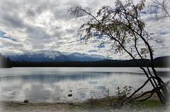 Cloudy day (Jasper NP, Canada) (armxesde) Tags: pentax ricoh k3 canada kanada jasper jaspernationalpark rockymountains alberta mountain berg lake see wasser water spiegelung reflection lakeannette cloud wolke tree baum