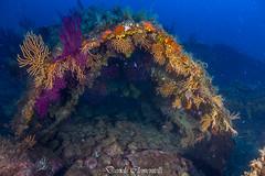 IMG_1402 (davide.clementelli) Tags: diving dive dives padi immersione immersioni ampportofino portofino liguria friends amici underwater underwaterlife sottacqua
