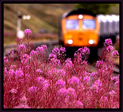 Pink Sunshine (Blaydon52C) Tags: pink gbrf 6e69 blea moor ribblehead settleandcarlisle trains train transport railway rail railways railfreight locomotive locomotives loco arcow