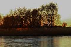 Sunlight and silhouettes (Eddie Crutchley) Tags: europe england cheshire outdoor nature lake sunlight simplysuperb sunset silhouette trees water beauty greatphotographers