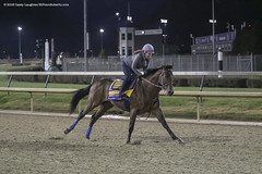 Morning Gallop (Casey Lynn Photos) Tags: 2018copyright breederscup churchilldowns churchill kentucky louisville canon canon7dmii canonphotography canonusa canonlens action actionphotography sports sportsphotography