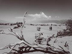 8A4937F1-D7C0-45FC-84DC-5198FDFC9641 (Sachin Uplaonkar) Tags: california vscox vscocam vsco arizona nevada deathvalley grandcanyon antelopecanyon monolake ontheedge blur dreams redwoodtrees muirwoods deathvalleynationalpark