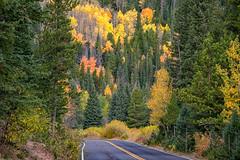 Autumn Road Trip (RkyMtnGrl) Tags: landscape nature scenery vista conifers aspens trees road autumn fall rockymountainnationalpark rmnp colorado 2018 nikon 28300mm