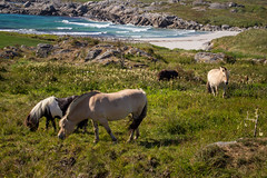IMG_8002.jpg (gislepa) Tags: norway familie ferie norge