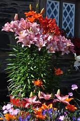 Les fleurs de Luss, Argyll and Bute, Ecosse, Royaume-Uni. (byb64) Tags: luss lus lomond lochlomond dunbartonshire argyll argyllandbute ecosse schottland scotland escocia scozia grandebretagne greatbritain grossbritanien granbretana royaumeuni reinounido vereinigteskönigreich eu europe europa ue uk unitedkingdom village pueblo borgo dorf fleurs fiori flores flowers cottage