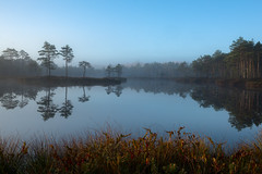 _DSC2911 (Raimond Z.) Tags: autumn colors eesti estonia water nature bog raba reflection morning sunrise