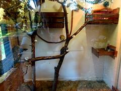born_083 (OurTravelPics.com) Tags: born common marmosets kasteelpark zoo