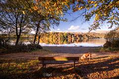 Gartmorn - 14 Oct 2018 - 09.jpg (ibriphotos) Tags: woodland alloaharbour blue sunset river alloa clackmannanshire riverforth trees gartmorndam leaves orange autumn evening goldenhour sky sunsets