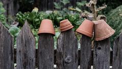 pots (blaendwaerk) Tags: fujifilm xt2 topf töpfe pot pots green grün garten garden zaun fence wood holz 80mm