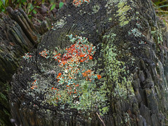 P1020154 (rpealit) Tags: scenery wildlife nature weldon brook management area