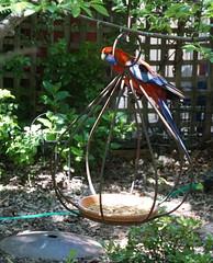 Rosella on the #Ironworks bird feeder! (spelio) Tags: sony a6000 garden oct 2018 flowers etc act birds wildlife explore ironworks bird feeder ironworx 1335views3010181150pm
