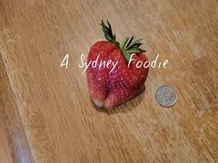 Strawberry (asydneyfoodie4) Tags: mondayharvest garden strawberry lowanna biggerthananickel