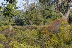 _IMG2497 (Henk de Regt) Tags: the netherlands gelderland natuur nature landscape grass bos forest trees zonsopkomst sunset sundown zonsondergang swamp nederland veluwe landschap gras water bomen moeras