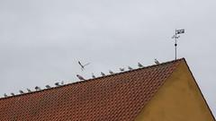 En fugl er fløjet