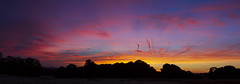 Richmond Park. (richard.mcmanus.) Tags: richmondpark dawn london clouds sunrise panorama landscape trees england