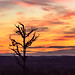 a tree in sunset scenery
