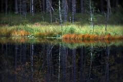 In the Nuuksio national park (Tatu Korhonen) Tags: ko120m sovietmovieprojectorlens sonynex5 nuuksio finland
