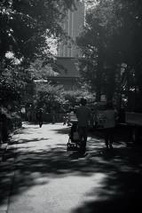 farewell summer@Ueno, Tokyo (Amselchen) Tags: park tokyo season bnw mono monochrome blackandwhite lightandshadow shadow fujifilm fujinon fujifilmxt2 xt2 xf35mmf14r travel