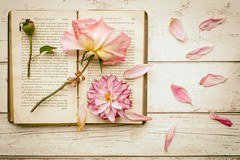 284/365: Casualties of autumn (judi may) Tags: 365the2018edition 3652018 day284365 11oct18 book flatlay stilllife flowers vintage vintvintagebook petals autumn october canon5d 50mm october2018amonthin31pictures flower dahlia rose