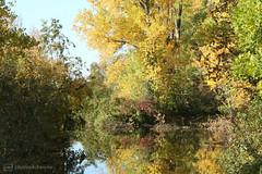 beautiful autumn 2 (photos4dreams) Tags: gersprenz münster hessen germany naturschutz nabu naturschutzgebiet photos4dreams p4d photos4dreamz nature river bach flus naherholung