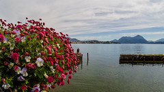 20180615-lago-maggiore-00716_web (derFrankie) Tags: 2018 anyvision b bestofbest f italien l labels n p r s t w bank exported flora flower lake landscape loch nature plant reflection reservoir river sea sky tourism tree ultraselect water stresa piemonte italy it