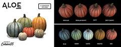 Autumn Pumpkins (Aloe [Alli Keys]) Tags: pumpkin graphics design second life fall autumn shades 3d creations artist mesh outdoor home garden orange blue green dirt dirty white red