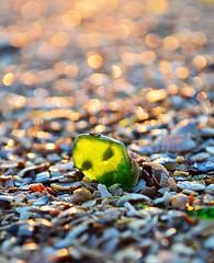 36152633 (aniaerm) Tags: sea coastalfinds sand