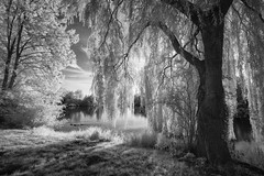 trees (hansekiki ) Tags: niedersachsen park stadtpark landschaften trees baum infrared infrarot canon5d