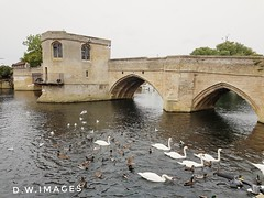 St Ives Cambridgeshire uk (madmax557) Tags: swans england uk stives cambridgeshire water watersedge waterways rivers rivernene riverbank riverside bridgeovertheriver river architecture bridge bridges