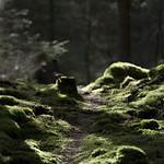 Sun lit forest path thumbnail