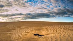 The Big Drift (Chas56) Tags: ngc canon canon5dmk4 sand dunes sanddunes landscape thebigdrift wilsonspromontory victoria australia