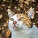 cat (Christine_S.) Tags: olympusem10markiii olympus75300mmf4867