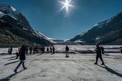 Columbia Glacier, Jasper National Park, Canada (YL168) Tags: columbiaglacier jaspernationalpark canada sonyemount icefieldparkway snow ice