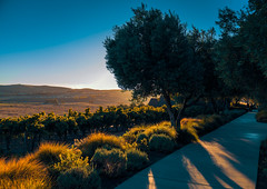 Shadows at Ram's Gate Winery (Thanks for 1.4 million views) Tags: winery ram gate california wine