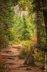 Mount Rainier National Park | Naches Peak Trail (Nature1844 Photography) Tags: mountrainiernationalpark chinookpass nachespeaktrail autumn fallcolors outcropping gnome trail hiking forest woods woodland october treestump naturephotography landscapephotography path foliage see texture stone nature