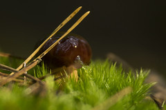 _IMG4537 (andrzejreschke) Tags: insects reptiles plants grass nature butterfly lizard moss flowers beauty beautyofnature