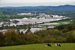 Flooded Towy Valley (howell.davies) Tags: towy valley flood flooded fields trees river water wet cows animals hills clouds sky storm callum nikon d3200 55300mm landscape