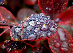 in the rain (majka44) Tags: macro drops leaf nature rain water light reflection red autumn droplet 2018 bokeh