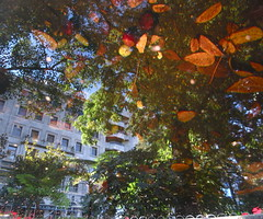 The Beast Behind the Beauty (andressolo) Tags: reflections reflection reflejos reflected water agua abstract abstracto building buildings leaves pond puddle trees city urban