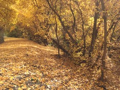 IMG_2797 (August Benjamin) Tags: provo provoriver provorivertrail fall utah mountains provocanyon fallcolors autumn trees leaves orem utahvalley jogging