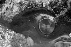 Wahclella Falls (Tony Pulokas) Tags: wahclellafalls columbiarivergorge columbiagorge autumn fall creek stream tannercreek leaf alder moss rock tilt blur bokeh lichen reflection oregon