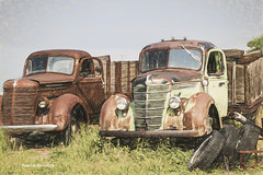 Heap Brothers      ......HTT! (jackalope22) Tags: htt trucks junkers heaps rust patina billings