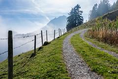 Suisse - Le Moleson (denis.fleurot) Tags: montage suisse alpes sentier chemin balade randonnée sommet paysage clôture verdure arbre sapin