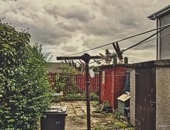 12.09.2018. El patio trasero (mcawaterstone) Tags: patio arbustos mcaguado derry árbol fruta edificios contenedores
