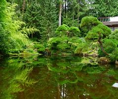 Japanese garden reflection (ekelly80) Tags: washington august2018 summer bloedelreserve bainbridgeisland green gardens walk trees reflection water pond japanesegarden forest woods trail