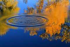 Fresnel (arbyreed) Tags: arbyreed water reflection blue yellow ripples rings splash fall trees fallcolors brightcolors vividcolors