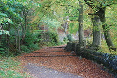 Judy Woods (Halliwell_Michael ## Offline mostlyl ##) Tags: brighouse westyorkshire landscape nikond40x 2018 autumn norwoodgreen judywoods autumncolour trees halifaxcourier brighouseecho calderdale